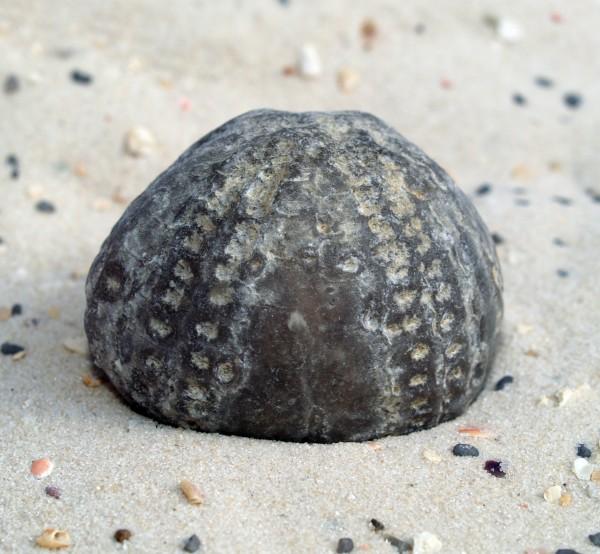 sten sostjerne fossile saltvand havet ocean