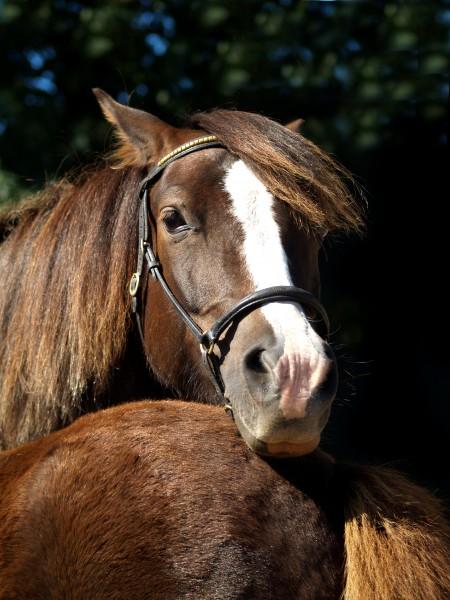 hest brun heste baby spaedbarn pattebarn
