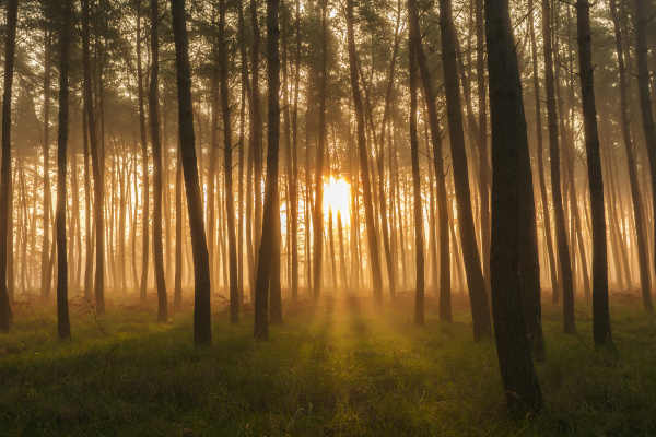 sollys skinner gennem silhuettraeer i en