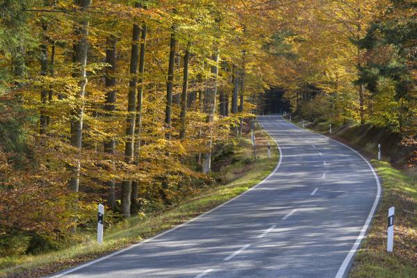 trae park nationalpark turisme kaukasisk europid
