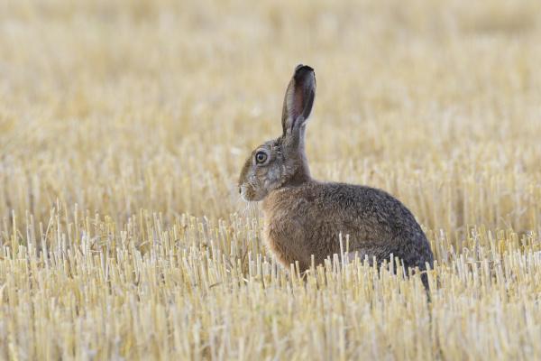 profil makrooptagelse naerbillede dyr pattedyr mark