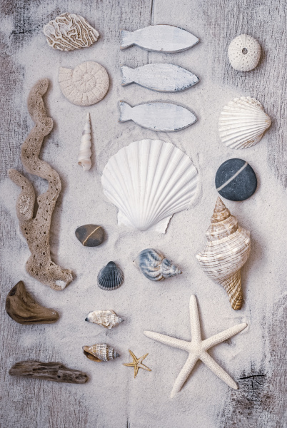 maritime, still, life, with, shells - 28215394