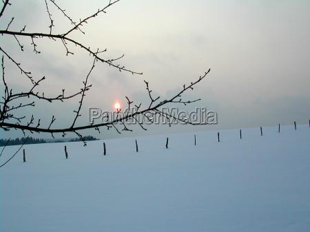 vinter grene kviste modlys sne lys