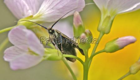 karl beetle