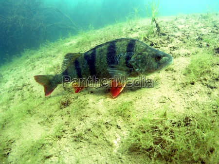 undersoisk ferskvand vand dive dykning barske