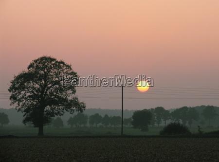 telefon appelsin trae traeer solnedgang felter