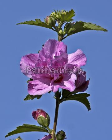 bla blomst plant plante gron gront