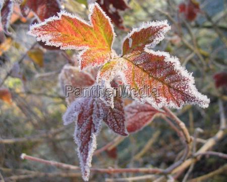vinter kold koldt frost frostvejr rimfrost