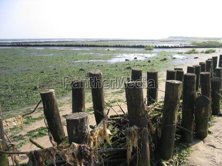 beach seaside the beach seashore kelp