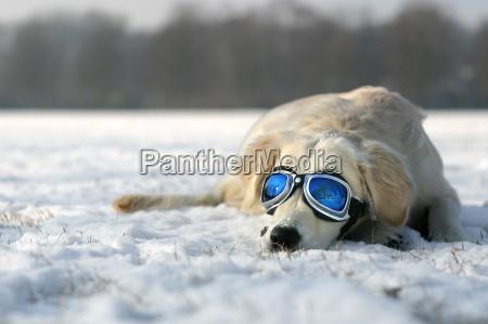 solbadning, i, winter - 214334