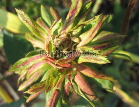 blomst rose plante gron gront gronne