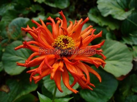 appelsin have blomst plant plante blomstre