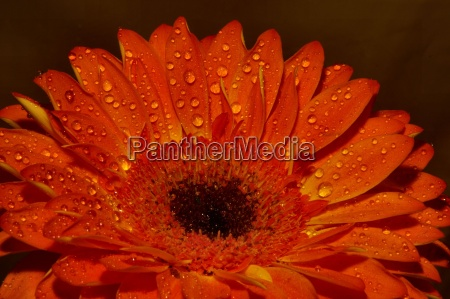 appelsin blomst plant plante brun blomstre