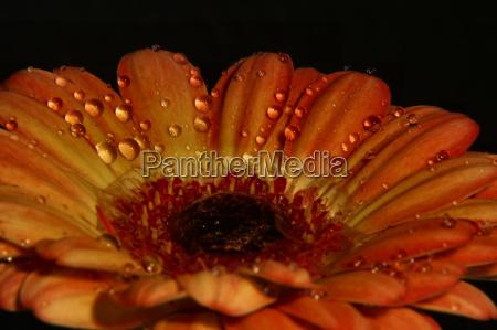 appelsin valgfri blomst plant plante blomstre