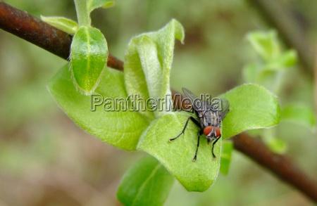 makrooptagelse close up naerbillede trae insekt