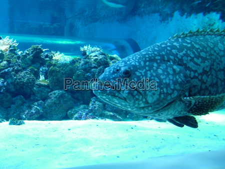 akvarium fisk barske coral reef reef