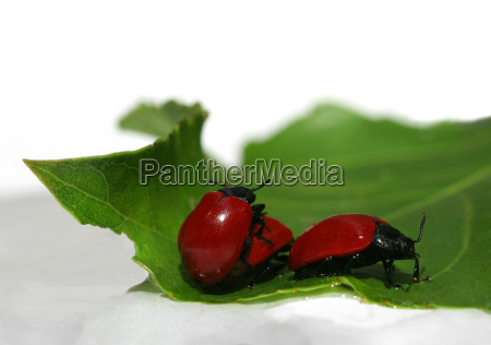 beetles at work