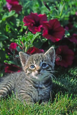 ung indenlandsk kat animalsk barn
