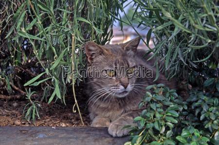 kaeledyr husdyr katte iagttagelse skjulte skjule
