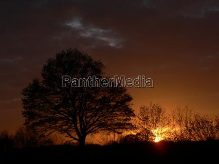 trae traeer solnedgang mark solopgang landskab