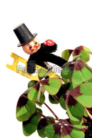 blomst plant plante sort dybsort kulsort
