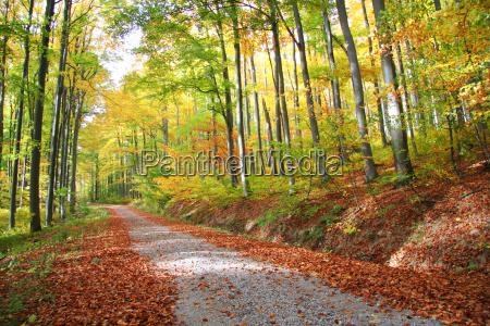 autumnal skov vej nr 1