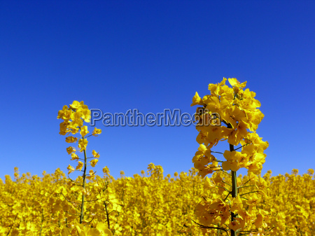 azul primer plano insecto flor planta