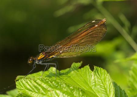 vande insekter baek ferskvand dam vand