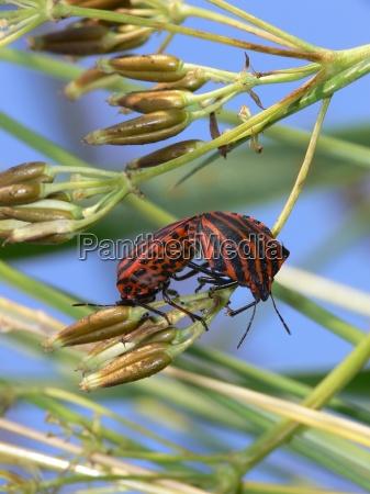 makrooptagelse close up naerbillede plante insekt