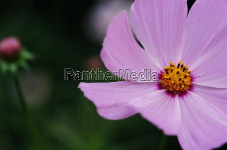 blomstre blomstrende flora botanik vaekst busk