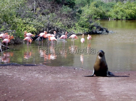 galapagas a haven for wildlife