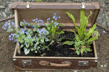 plante kufferter