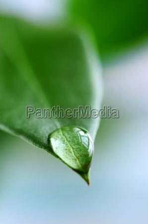 vand drabe pa gron blad