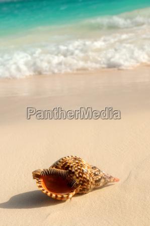 seashell og ocean bolge