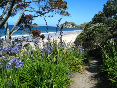 maleriske blooming bay coromandel nz