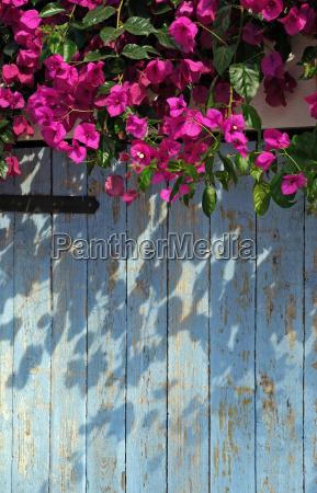 bla farve blomst plant plante flora
