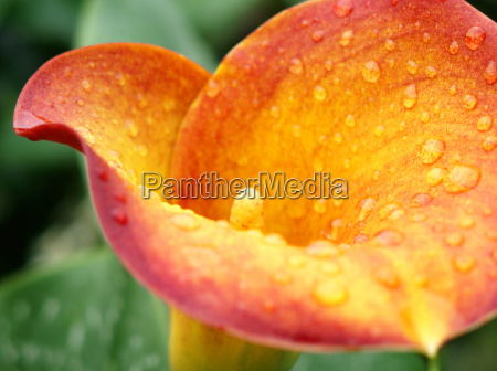 blomst plant plante blomstre blomstrende blomsterbaegeret