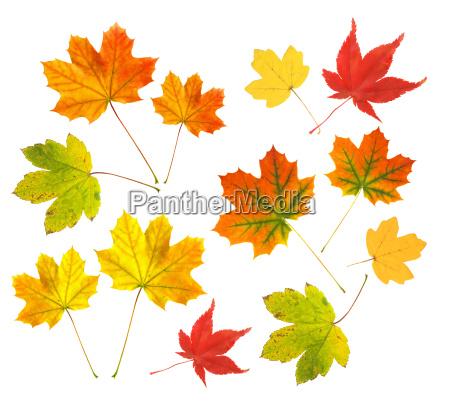 trae blade farverig staerkt farvet kulort