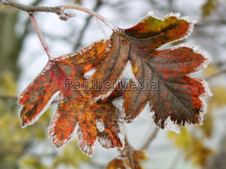 frost frostvejr rimfrost tjorn dwuszyjkowy