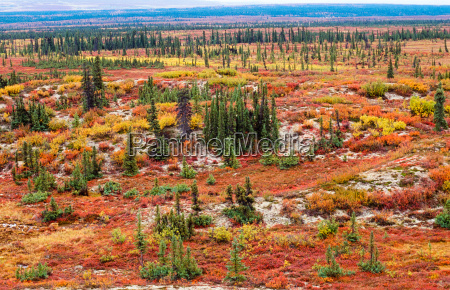 tundra landskab i efteraret farve