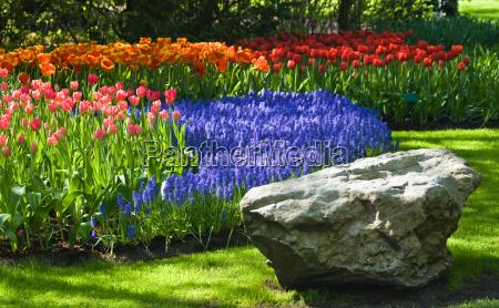 springtime in park