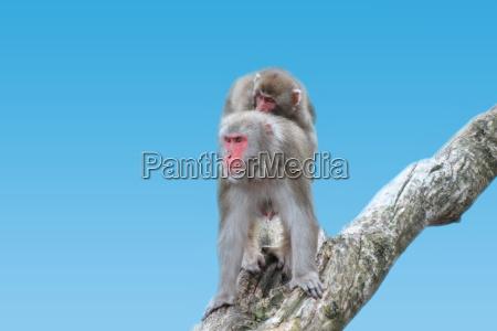 fauna dyr aber natur