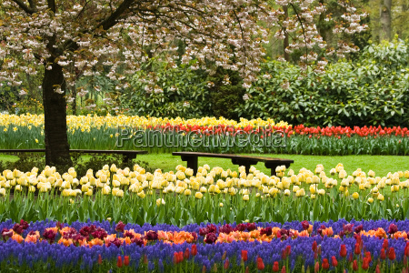 have blomst plant plante blomster tulipaner