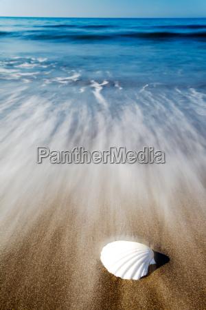 muslingeskal pa en strand