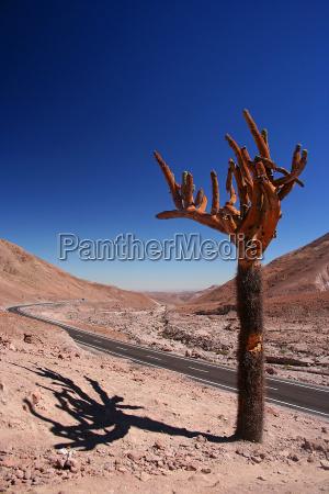 nationalpark chile kaktus andes