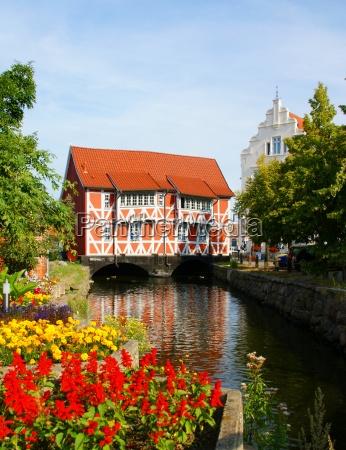 historico flor flores planta canal torcido