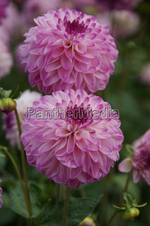 have blomst plant plante blomstre blomstrende
