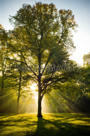 tree baggrundsbelyst