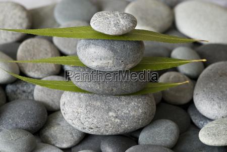 sten tarn og blade
