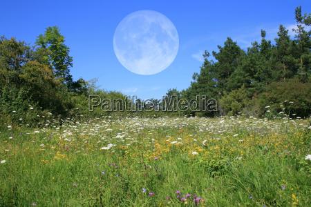 meadow med manen